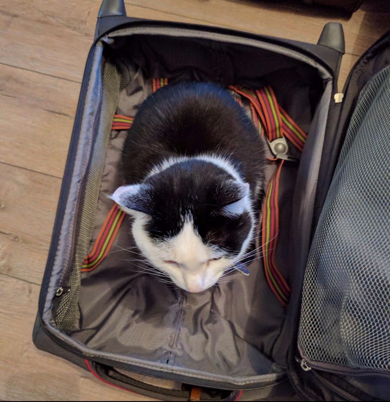 Chat assis dans une valise